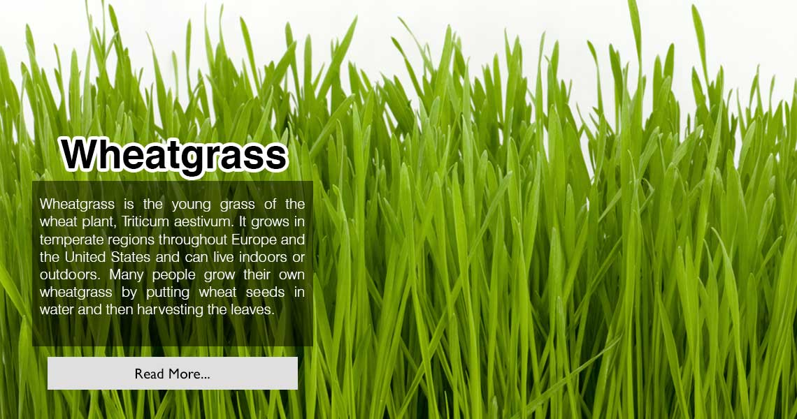 wheat-grass