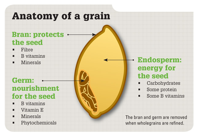 whole-grain-anatomy2