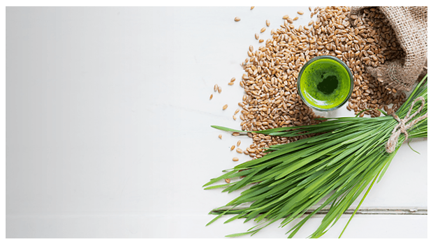 Everything You Need to Know About the Benefits and Uses of Wheatgrass