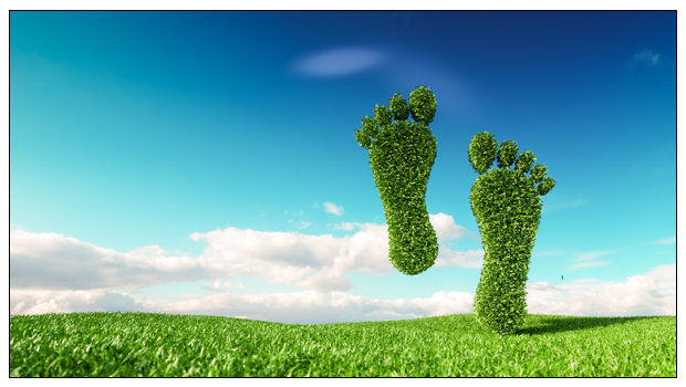 5 Baby Steps to Go Organic