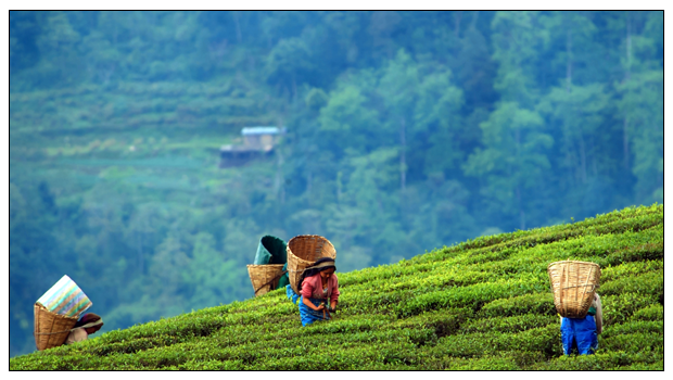 Going 100% Organic – Sikkim's Success Story