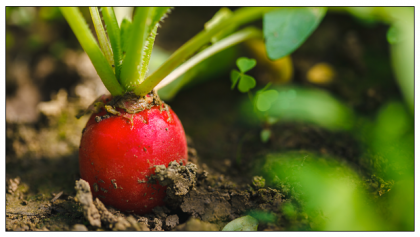 How Organic Farming is Contributing to the Environment