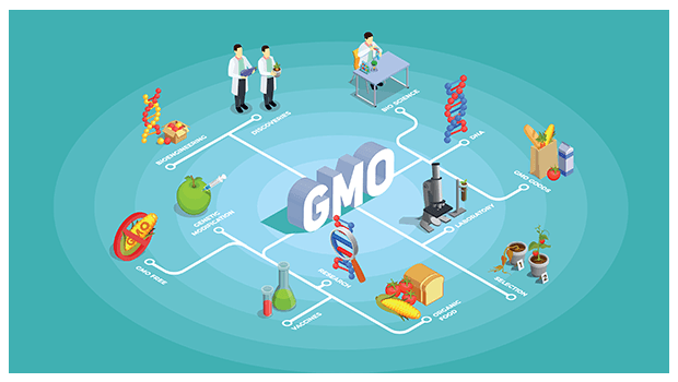 HOW IS GMO HARMFUL FOR YOUR HEALTH?