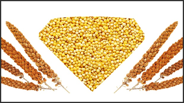 6 HEALTH BENEFITS OF ORGANIC MILLETS