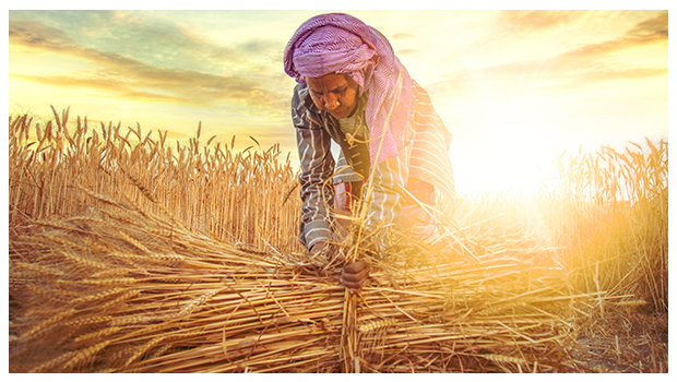 5 REASONS TO CELEBRATE NATIONAL FARMERS' DAY