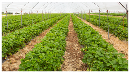5 REASONS WHY YOU MUST PAY MORE ATTENTION TO ORGANIC FARMING