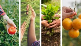 All you ever wanted to know about organic farming advantages