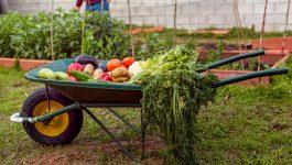 Making Your Summer Vegetable Garden