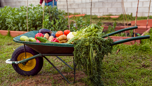 Making-Your-Summer-Vegetable-Garden
