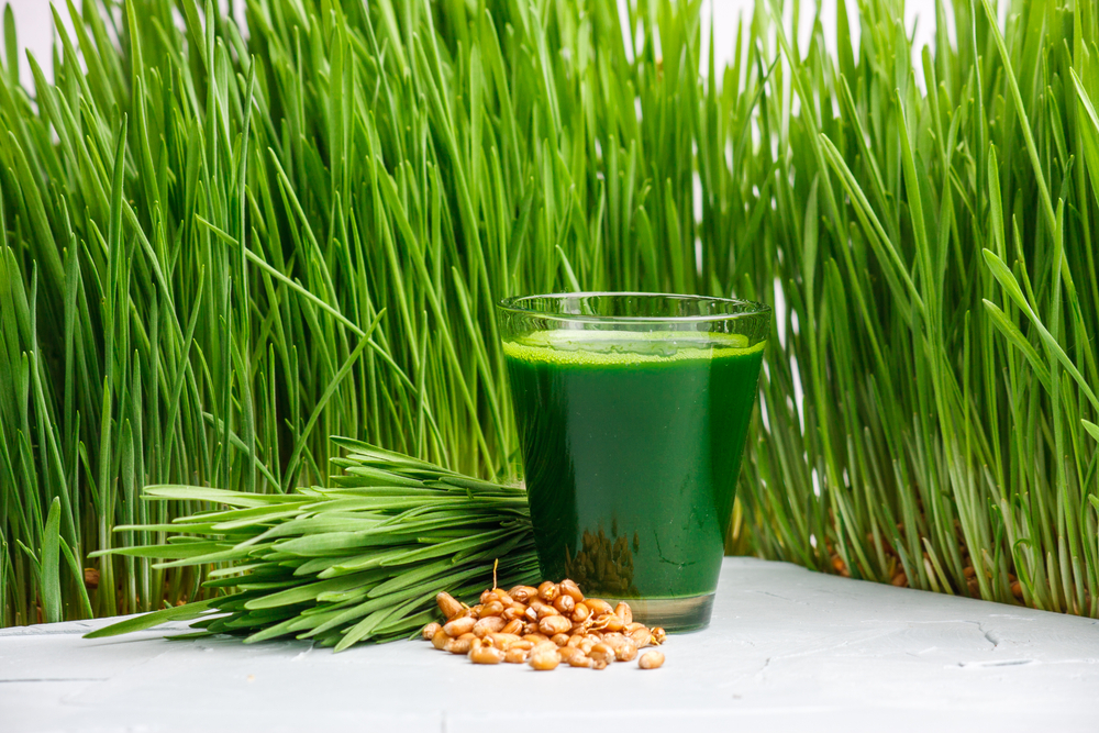 How-Can-Wheatgrass-Help-With-Weight-Loss?