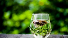 Everything You Need To Know About Green Tea For Your Weight Loss Journey