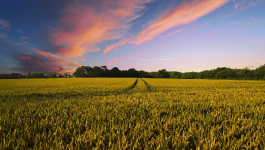 Organic Farming vs Conventional Farming: Which Method Is Better?