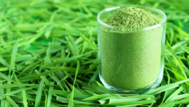 Learn How to Use Wheatgrass Powder For Its Magical Benefits!