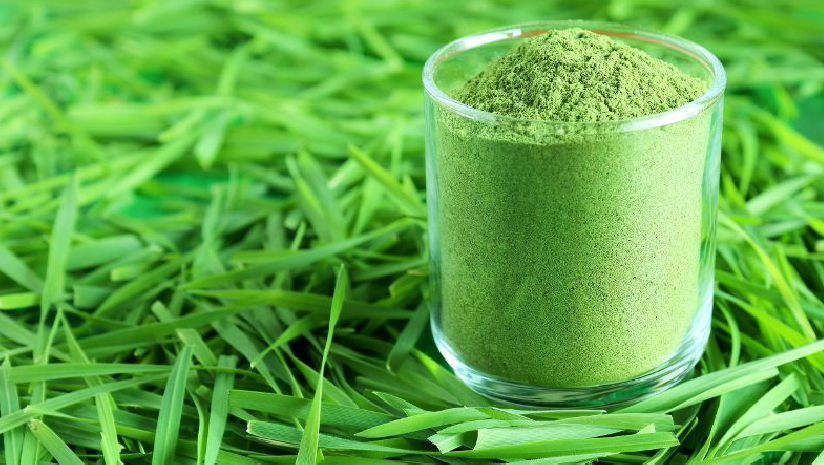 Learn-How-to-Use-Wheatgrass-Powder-For-Its-Magical-Benefits!
