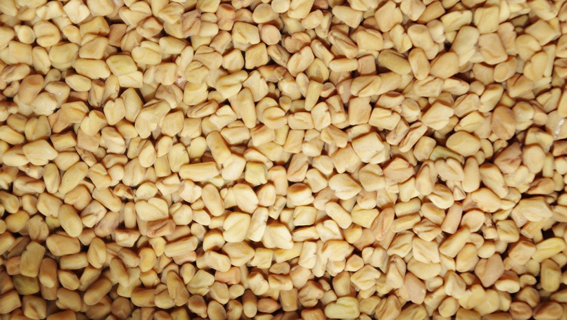 Fenugreek-Benefits-for-Hair:-Everything-You-Need-to-Know