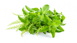 Indian Medicinal Herbs to Promote Health and Wellbeing