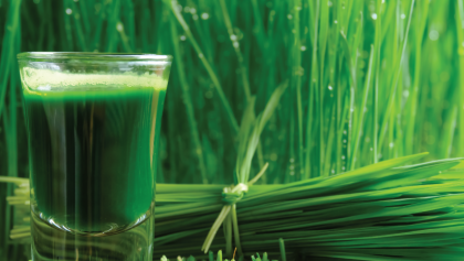 Can Wheatgrass Beat Cancer? Here's What Science Says