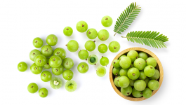 Indian Herbs to Boost Immune System