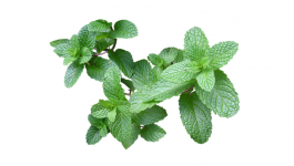 Cool Foods to Cool You Down and Reduce Body Heat