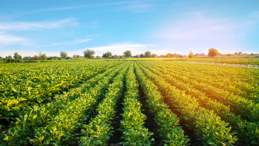 How-Organic-Farming-Projects-are-Making-the-World-a-Better-Place?