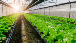 Types of Organic Farming: Methodologies, Objectives, and Advantages