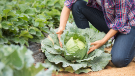 How is Organic Farming Promoting Sustainable Development in Agriculture?