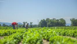 Four Guiding Principles of Organic Farming