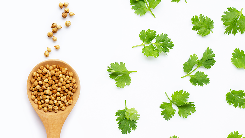 Coriander-Seeds-Nutrition-Facts-and-Health-Benefits