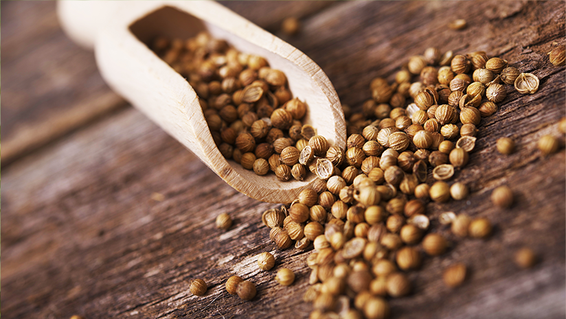 Can-Coriander-Seeds-Help-Weight-Loss?