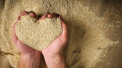 Traditional Indian recipes of Quinoa