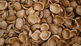 12 Types Of Almonds You Didn't Know Of