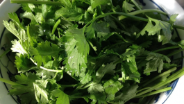 Health Benefits Of Coriander Water For Thyroid