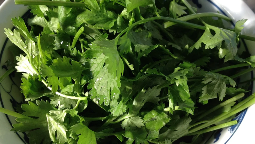 Health-Benefits-Of-Coriander-Water-For-Thyroid