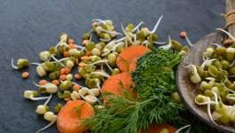 Get the Real Facts on Sprouted vs Unsprouted Mung Beans