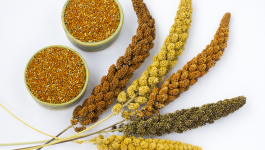 Millet vs Rice – Are Millets Better Than Rice?