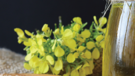 Mustard Oil Benefits For Muscle Pain/ Rheumatoid Arthritis/ Leg Pain