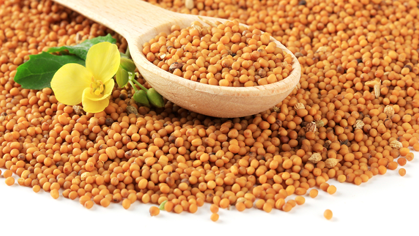 mustard oil for constipation